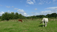 Horses eating grass in grassland Stock Footage