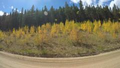 baby golden Aspen trees and Ponderosa Pine trees line a dirt road POV shot - stock footage