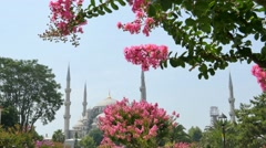 Blue mosque istanbul dolly shot as seen behind flowers Stock Footage