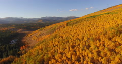 Aerial Shot of Aspen Trees Changing Colors in Fall Stock Footage