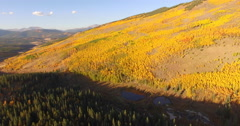 Fall Aspen Trees Change Colors Aerial Shot Stock Footage