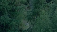 Stag running through trees - stock footage