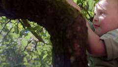 Little Boy Sits In Tree, Holds On, Looks Around, Camera Tilts Down To His Feet Stock Footage
