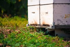 hive by the bees closeup - stock photo