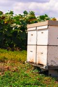 hive by the bees - stock photo