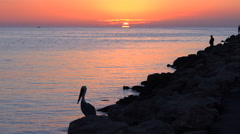 A fisherman and a pelican stand in silhouette at sunset along an ocean - stock footage