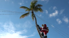 A Santa in a palm tree marks Christmas in Florida or another tropical Stock Footage