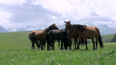 Herd in the Picturesque Foothills HD Stock Footage