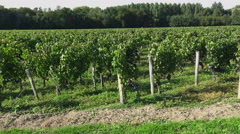 Traveling along the Bordeaux-Pomerol vineyards Stock Footage