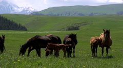Grasslands in the Foothills HD - stock footage