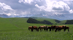 Rich Pastures in the Foothills HD - stock footage