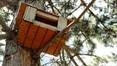 Homemade wooden birdhouse on the trunk of conifer in the forest Stock Footage