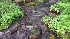 Mountain creek in a green forest in summer Stock Footage