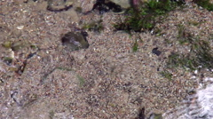 Clear water source in the spring breaks off the bottom Stock Footage