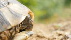 Turtle Testudo hermanni  hiding head in armour fauna animal background 4K  Stock Footage