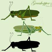 Grasshopper vector Stock Illustration