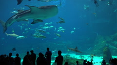 Visitors are silhouetted against a huge underwater tank filled with fish, sharks Stock Footage