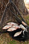 Catching freshwater fish and fishing rods with fishing reel. - stock photo