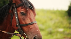 Flies sit on the head of a horse - stock footage