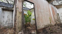 Large Wild Plant Growing In Room Of Abandoned Hotel Missing Roof Derelict Lost Stock Footage