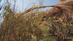 Dolly Shot of Landscape Arch in Arches National Park Stock Footage