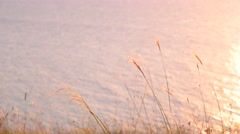 Dry grass against sea surface with ripples at sunset Stock Footage