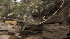 Close Up Spider Web On Branch Waterfall Rocks In Background Hand Held 50fps Stock Footage
