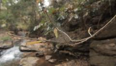 Close Up Spider Web On Branch Waterfall Rocks Background Hand Held Slow Motion Stock Footage