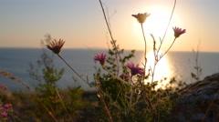Wild flowers against sea horizon at sanset Stock Footage