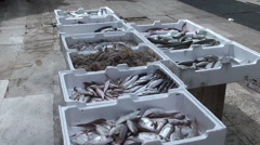 Fresh fish in a open air market Stock Footage