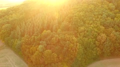 Beautiful forest and green meadows Stock Footage