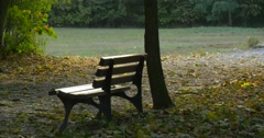 Empty Bench Under The Tree at The Park Green Meadow Field Green Trees Fallen - stock footage