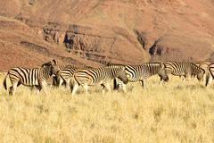 Desert Landscape - NamibRand, Namibia - stock photo