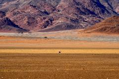 Gazelle and Desert Landscape - NamibRand, Namibia - stock photo
