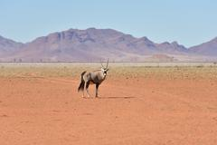 Oryx and Desert Landscape - NamibRand, Namibia Stock Photos