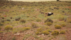 Scene of Wild Burro (Donkey) near Monument National Park (3 of 4) Stock Footage