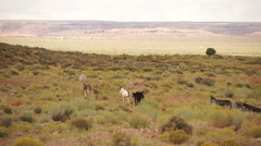 Scene of Wild Burro (Donkey) near Monument National Park (4 of 4) Stock Footage