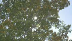 Sun Light 4k Shining Through Tree Leaves Blowing In Wind Lens Flare - stock footage