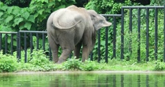 Elephant movement with 4K resolution view - stock footage