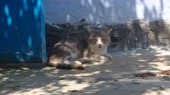 Ld cat resting near door in shadow Stock Footage