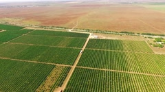 Stock Video Footage of Aerial View Over Standard Fruit Gardens