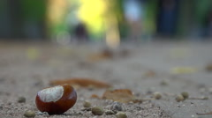 Chestnust in public park - sunny autumn  defocus walkers background - time lapse Stock Footage