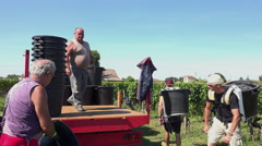 The grapes are brought to the tractor Stock Footage