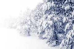 Forest Covered by Snow in Winter Landscape Stock Photos