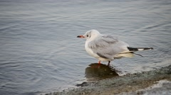 Tern standing in the water on the shore and walking away Stock Footage