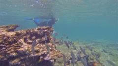 Free diver photographing a school of fish underwater at Bartolome Island in - stock footage