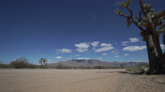 Low Angle View of Roadside Joshua Tree in the Desert Stock Footage