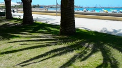 Palm trees in Alghero seafront Stock Footage
