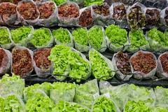 Fresh lettuces in supermarket Stock Photos