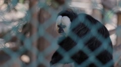 Saki Monkey Seats Inside His Cage in a Monkey Sanctuary Stock Footage